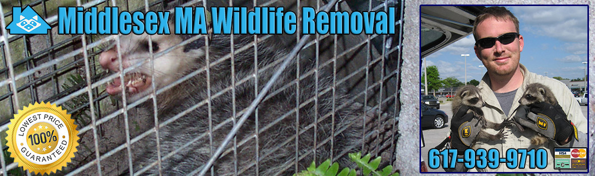 Middlesex County Wildlife and Animal Removal
